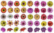 Large set of Dahlia flowers, and species include the Daisy, Chrysanthemum, and Zinnia. Ink floral art. Floral head for wedding decoration, Valentine's Day, Mother's Day, sales and events. Vector.