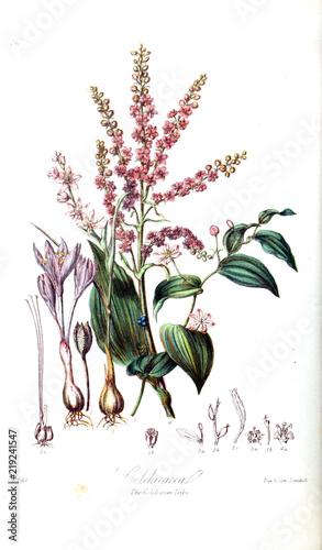 Fotobehang Draw Illustration of flower