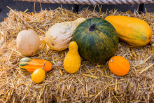 Decorative Pumpkins Arrangement On Hay Background For Fall Decoration