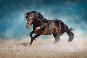 Bay horse with long mane run fast in desert dust against blue background