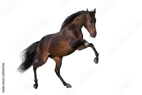 Dark stallion rearing up isolated on white background Fototapeta