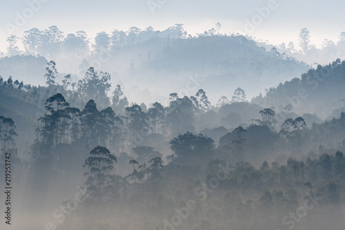 Aluminium Prints Blue sky Alive, Morning Mist over Western Ghats, India