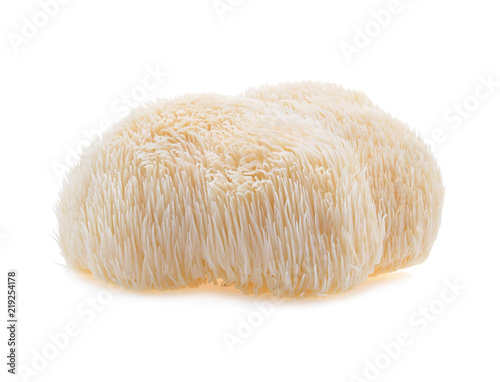 lion mane mushroom isolated on white background. Fototapeta