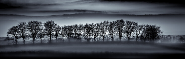 Tree Silhouettes in Mist, Cornwall
