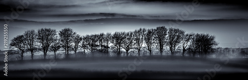 Obraz Tree Silhouettes in Mist, Cornwall - fototapety do salonu
