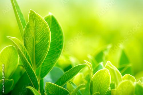 naturalne-liscie-w-ogrodzie-w-slonecznym-swietle