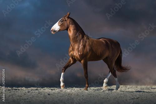 Fényképezés Red horse run in desert dust against dark dramatic sky
