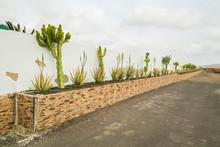 Cactus And Aloe Vera Plants On Stone Gardering In Fuerteventura, Canary Islands.