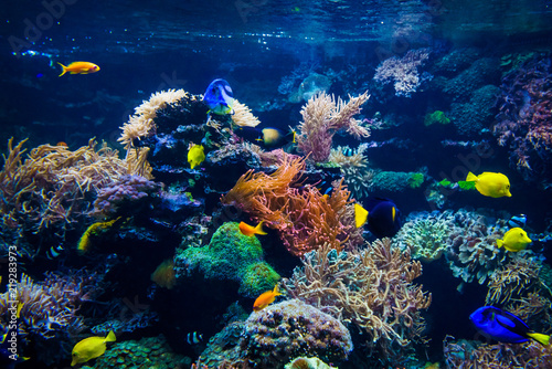 Fototapety, obrazy: Colorful coral reef with fish and stone
