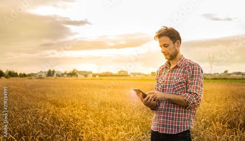 Fotografia  Farmer working on (using) tablet in front of wheat field
