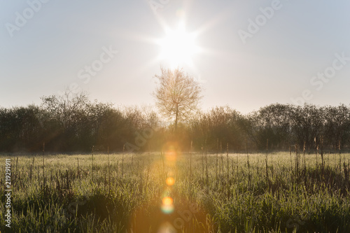 Sun Raising Over High Grasses with Morning Dew and Trees in Spring Canvas Print