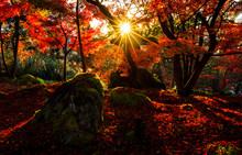 Silhouette Of Autumn Leaf With Sun Flare In Kyoto, Japan