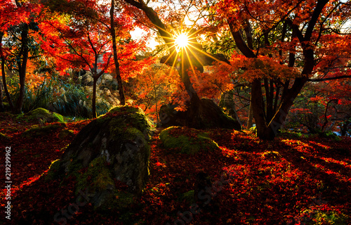 Poster de jardin Kyoto Silhouette of autumn leaf with sun flare in Kyoto, Japan