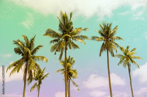 Poster Palmier palmeras en un día soleado