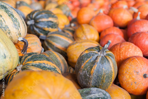 autumn seasonal harvest of pumpkins