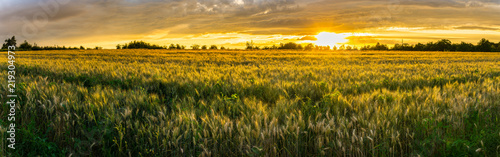 Tuinposter Cultuur Germany, XXL panorama of rural wheat fields in warm sunset light