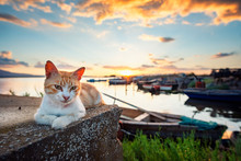 Stray Cat In The Lagoon Enjoy The Sunset