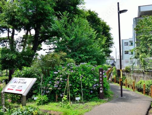 Foto 小平にあるあじさいの小径(東京都小平市)