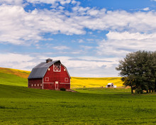 Red Barn And Canola Field In P...