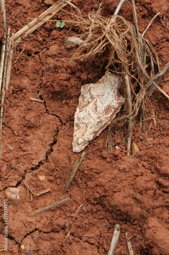 Fotografia  Authentic Native American Indian Arrowhead in dirt