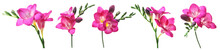 Set With Freesia Flowers On Wh...