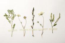Wild Dried Meadow Flowers On W...
