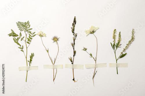 Obraz Wild dried meadow flowers on white background, top view - fototapety do salonu