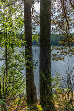 The Saimaa Lake In The Kolovesi National Park In Finland  Seen Through The Trees On Its Shores - 4