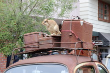 Rack Atop A Vintage Volkswagon With Luggage And A Stuffed Animal On It At The Concours D'Elegance In Carmel, California