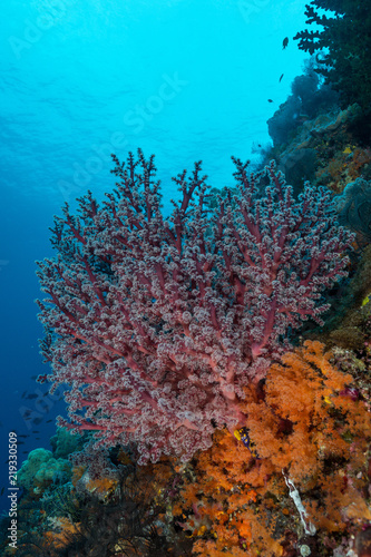 Poster Koraalriffen soft coral on the slope of a tropical reef