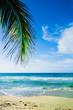 Palmtree at the Ocean