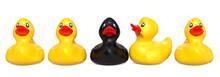 Black Rubber Duck Among Yellow...