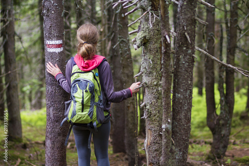 Back view of slim athletic blond tourist hiker girl with stick and backpack walking through lit by sun dense evergreen mountain pine forest Slika na platnu