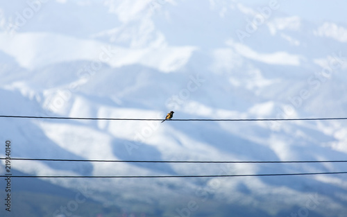 Photo the bird sits on an electric cable and on the background of a mountain from afar
