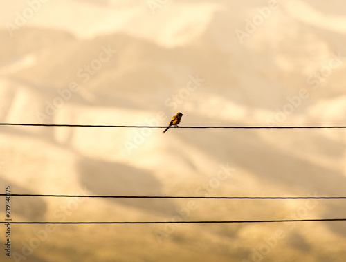 the bird sits on an electric cable and on the background of a mountain from afar Wallpaper Mural