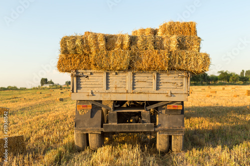 Straw on the field, people pick bales on the truck Canvas Print