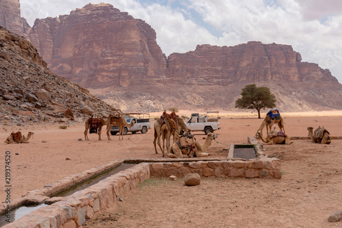 Camels rest at Lawrence of Arabia spring. Wadi Rum desert, Jordan
