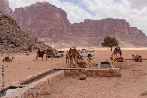Camels rest at Lawrence of Arabia spring. Wadi Rum desert, Jordan