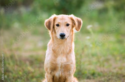 Photo  non-pedigree dog on the grass