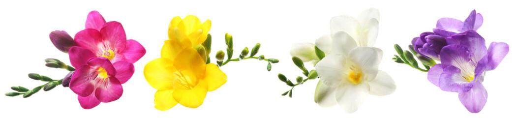 Panel Szklany Optyczne powiększenie Set with Freesia flowers on white background