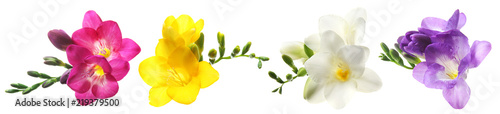 Photo Set with Freesia flowers on white background