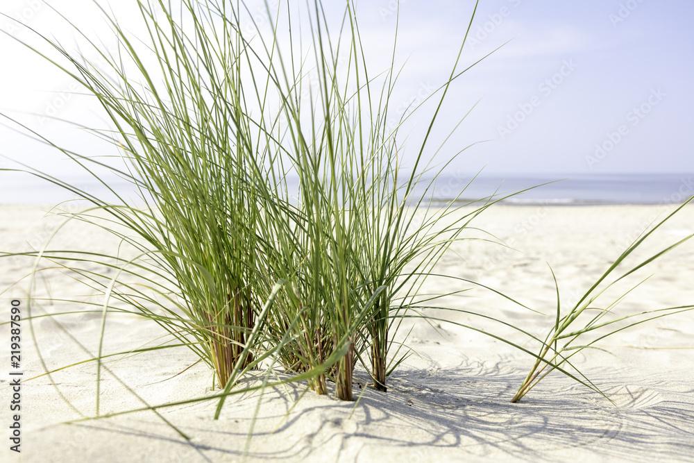 Fototapeta Morze Bałtyckie, widok z zachmurzonym niebieskim niebem