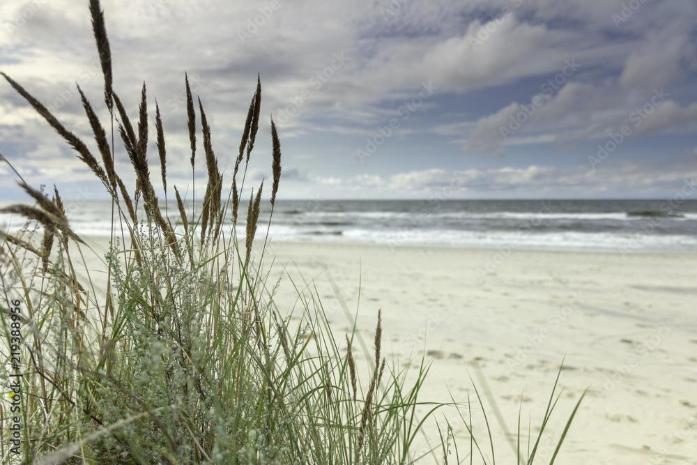 Fototapeta Morze Bałtyckie, widok z niebieskim bezchmurnym niebem