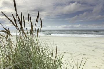 Fototapeta Morze Morze Bałtyckie, widok z niebieskim bezchmurnym niebem
