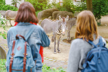 Happy Girl Friends Watching Zebra In Zoo. Having Fun In Safari Park And Education For Zoology Students Concept