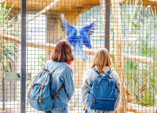 Girls students watching birds at the zoo. Leisure in touch with animals and nature concept