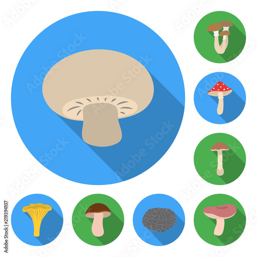 Fototapeta Poisonous and edible mushroom flat icons in set collection for design. Different types of mushrooms vector symbol stock web illustration. obraz