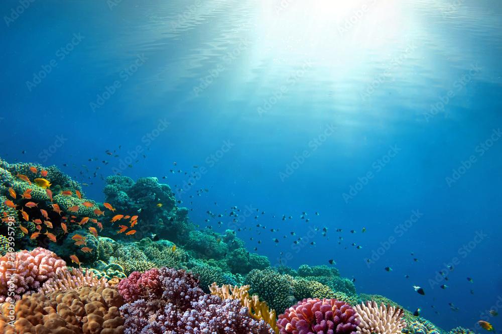 Underwater coral reef background