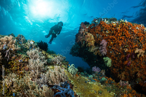 Poster Coral reefs woman diver underwater over a colorful tropical reef with sea fan, coral and sponge in Rajat Ampat, Indonesia