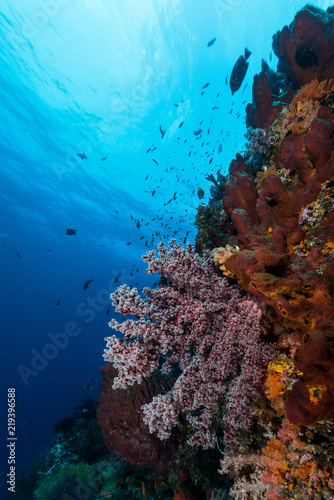Spoed Foto op Canvas Koraalriffen sea fan or gorgonian on the slope of a coral reef with visible water surface and fish